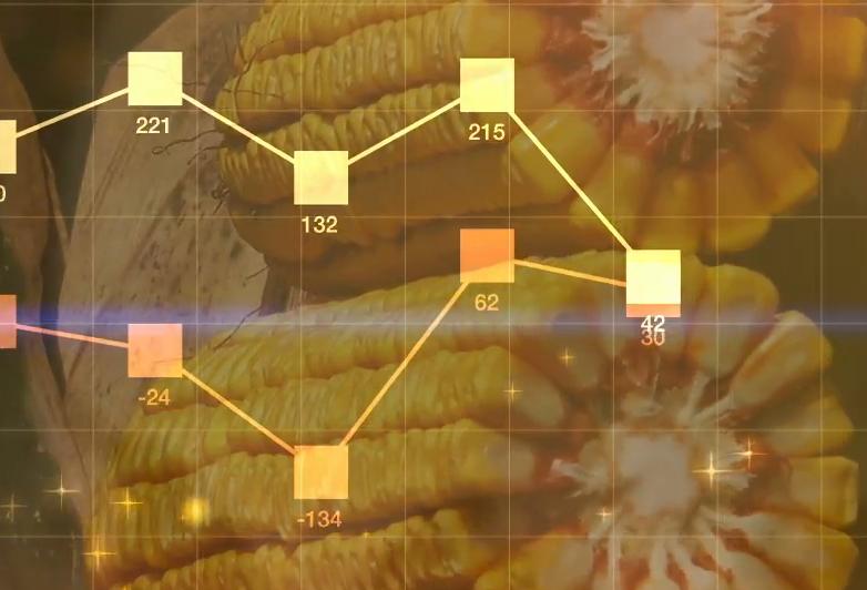 Belize Agriculture Price Information System (BAPIS)